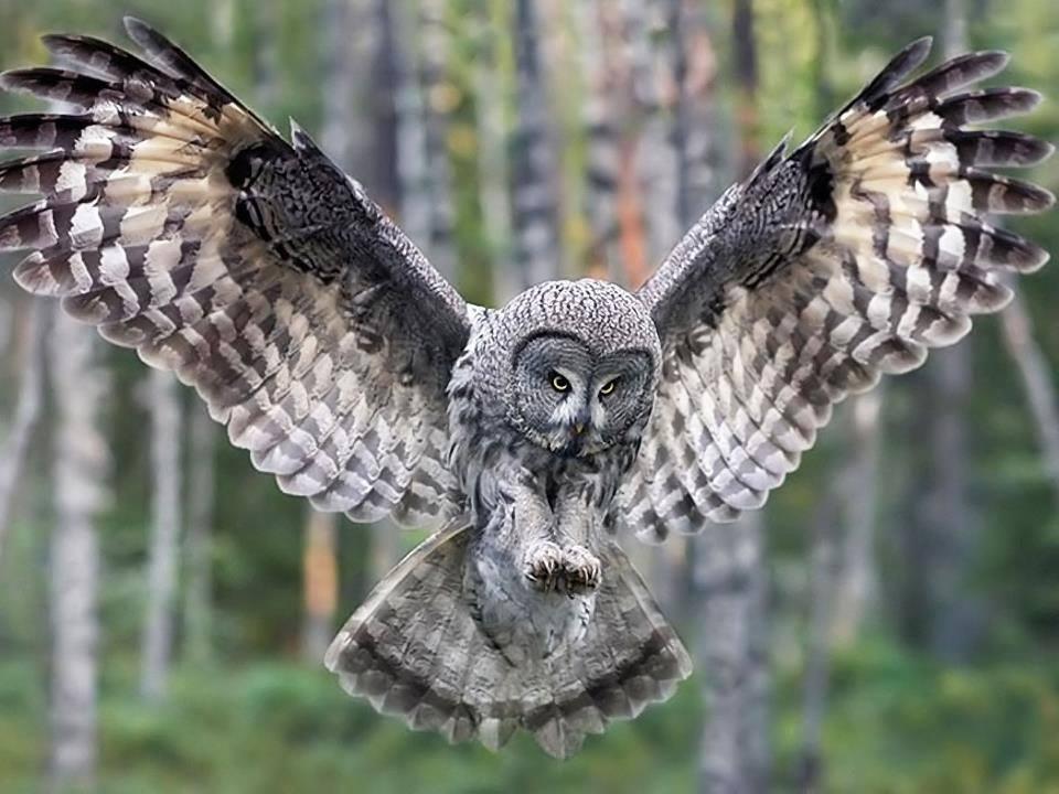 Totem Animal Shamanic Dreams Of A Pagan Earth