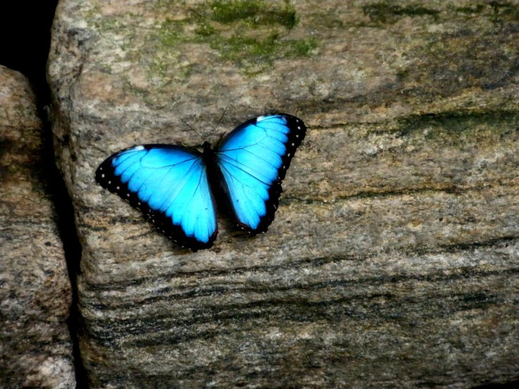 butterfly_by_shahar12-d47zxrn